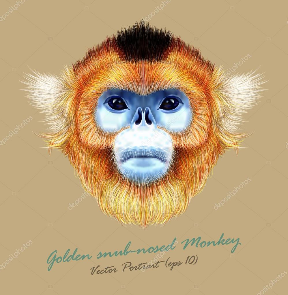 Vector Illustrated Portrait of Golden snub-nosed monkey