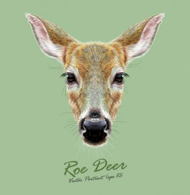 Roe Deer wild animal face. Vector European cute Doebuck head portrait. Realistic fur portrait of wild forest deer isolated on green background.