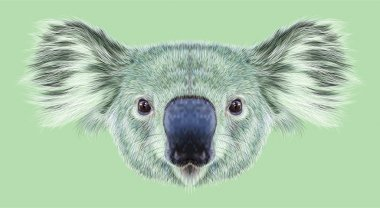 Illustrative Portrait of Koala Bear