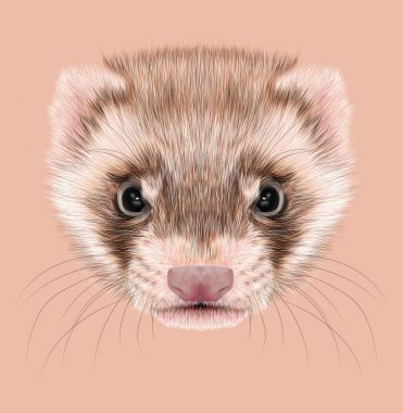 Ferret animal cute face.Funny cinnamon polecat head portrait. Realistic fur portrait of brown ferret creature isolated on pink background.