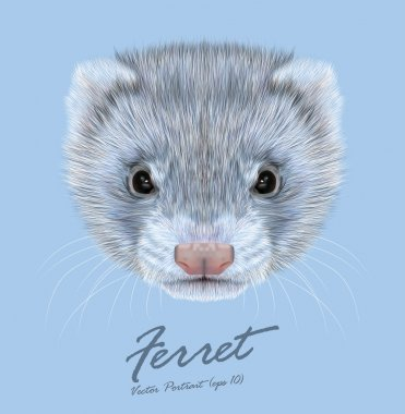 Ferret animal cute face. Vector funny silver polecat head portrait. Realistic fur portrait of gray ferret creature isolated on blue background.