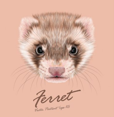 Ferret animal cute face. Vector funny cinnamon polecat head portrait. Realistic fur portrait of brown ferret creature isolated on pink background.