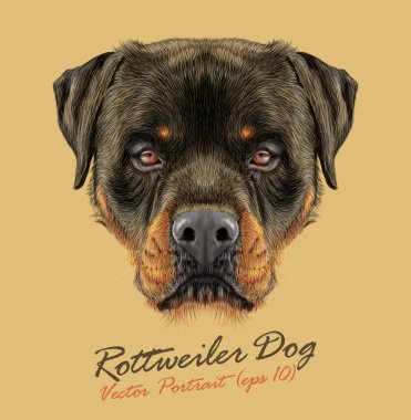 Rottweiler Dog animal strong face. Vector guard puppy head portrait. Realistic fur portrait of black and tan Rottweiler doggy isolated on tan background.