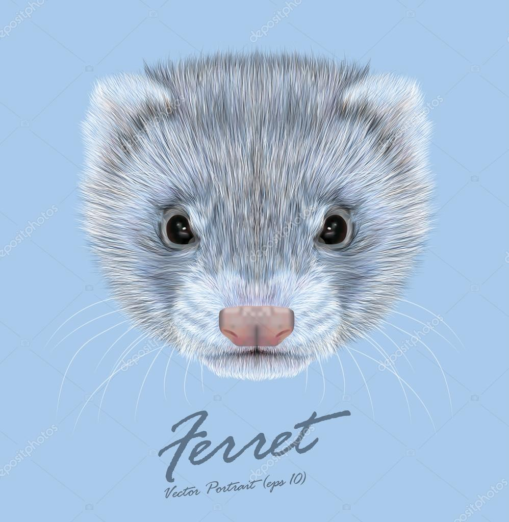 Vector Illustrative portrait of Ferret