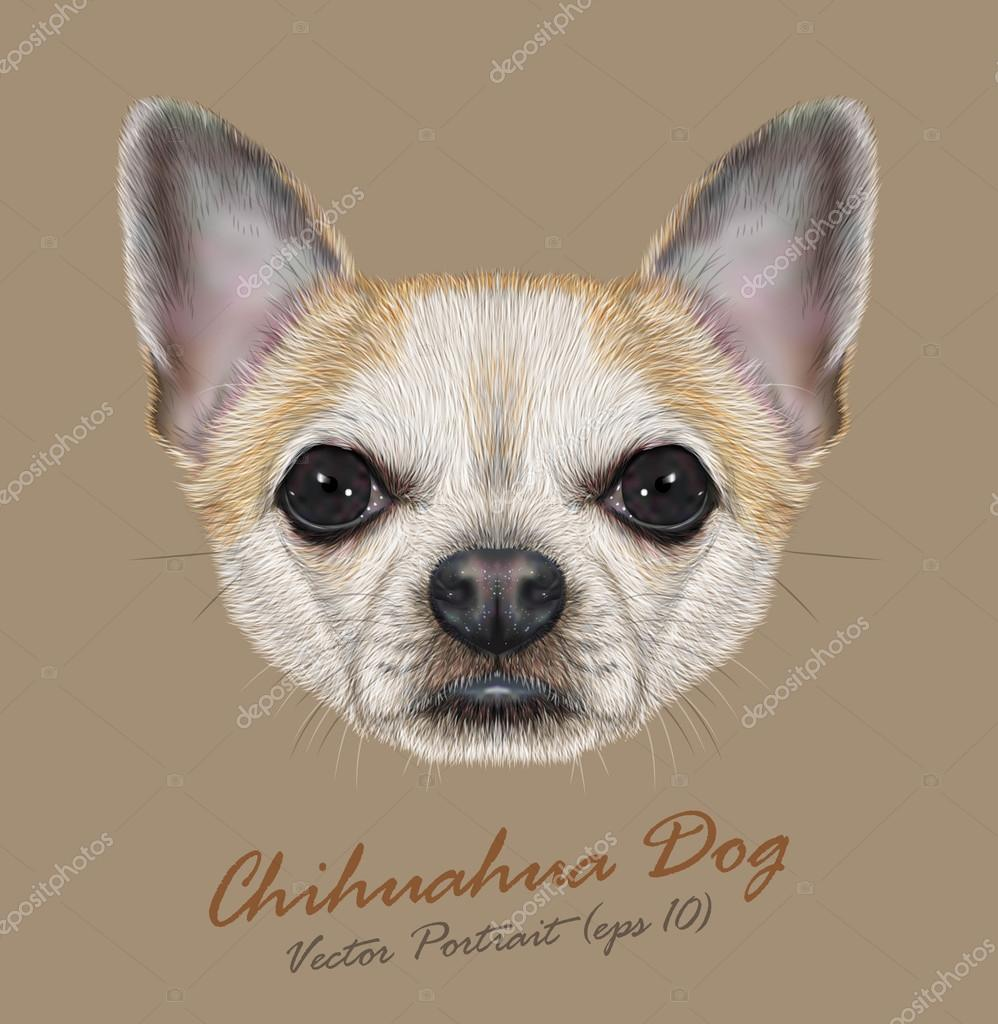 Chihuahua animal dog cute face. Vector golden spotted chihuahua puppy head portrait. Realistic fur portrait of chihuahua doggy isolated  on beige background.