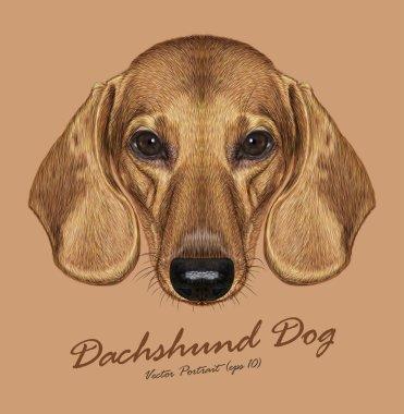 Vector Illustrated Portrait of Dachshund Dog