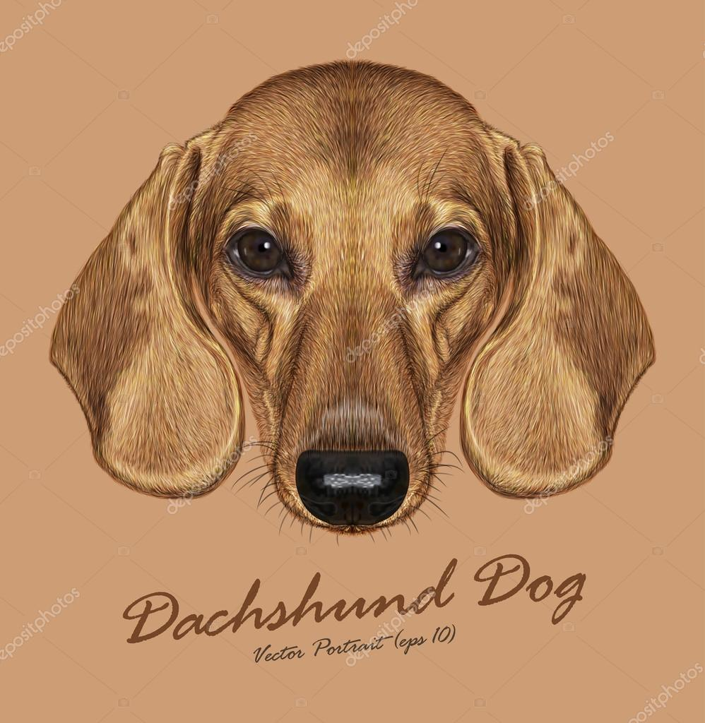 Vector Illustrated Portrait of Dachshund Dog