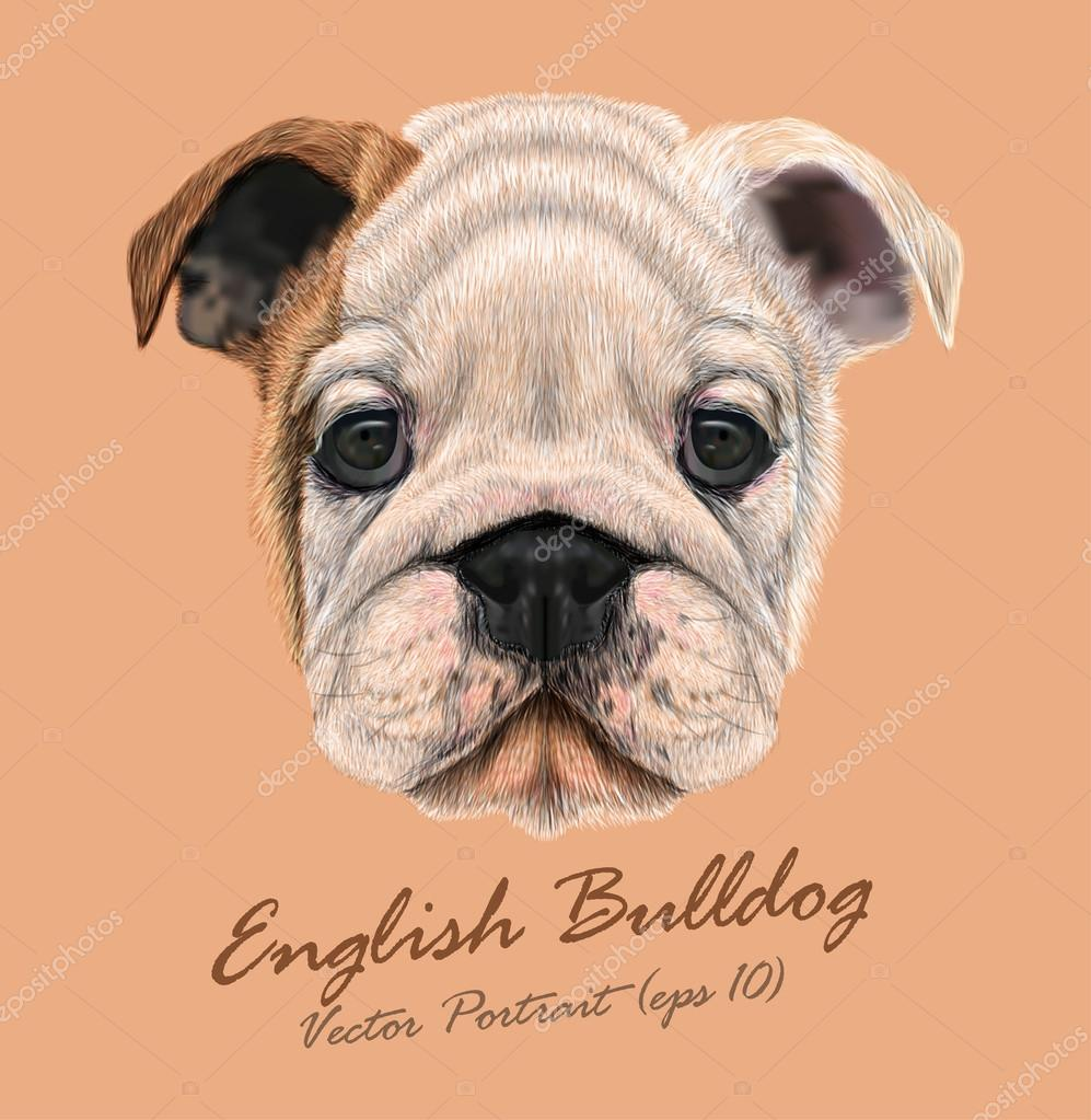 English bulldog animal cute face. Vector wrinkled brown and white English bulldog puppy head portrait. Realistic fur portrait of white funny  British bulldog doggy isolated on beige background.