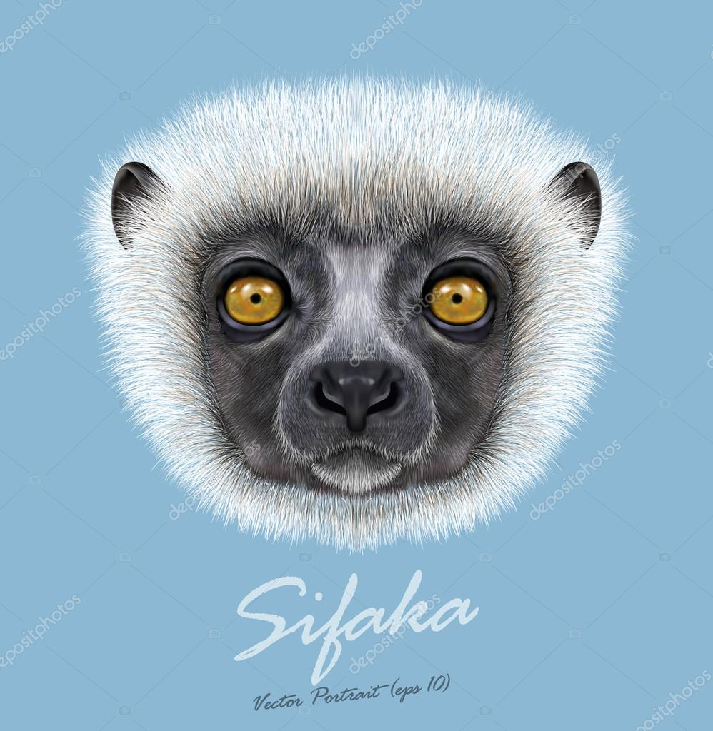 Vector Illustrated Portrait of Sifaka Lemur.