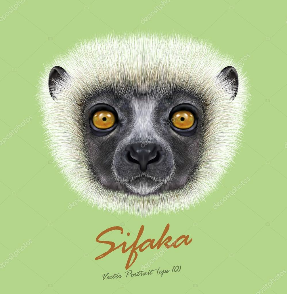 Vector Illustrated Portrait of Sifaka Lemur