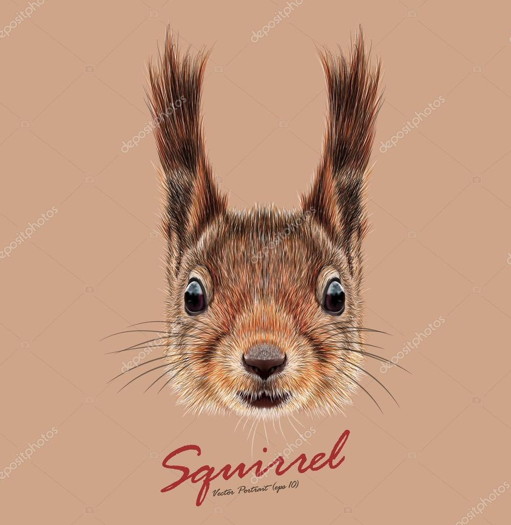 Vector Illustrated Portrait of Squirrel