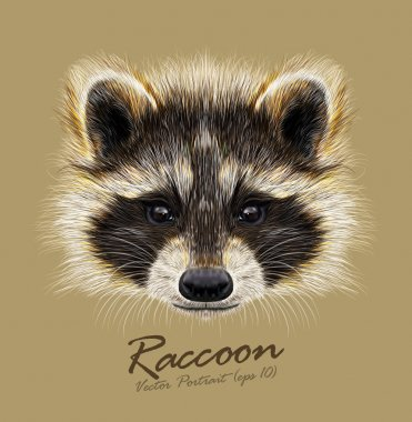 Raccoon Procyon lotor wild animal face. Vector cute North American mask raccoon head portrait. Realistic fur portrait of funny trash cat racoon isolated on beige background.