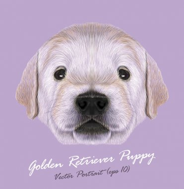 Vector Illustrated Portrait of Golden Retriever Puppy