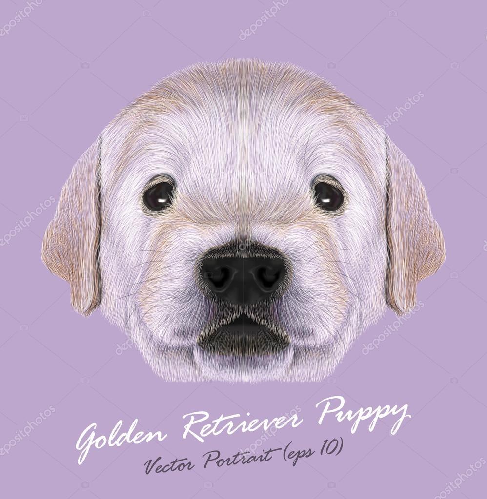 Vector Illustrated Portrait Of Golden Retriever Puppy Stock Vector