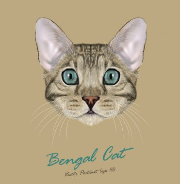 Bengal cat animal cute face. Vector young silver gray tabby purebred American Bengal kitten head portrait. Realistic fur portrait of blue eyes kitty isolated on beige background.