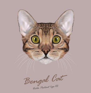 Bengal cat animal cute face. Vector young brown tabby purebred American Bengal kitten orange head portrait. Realistic fur portrait of green eyes kitty isolated on beige background.