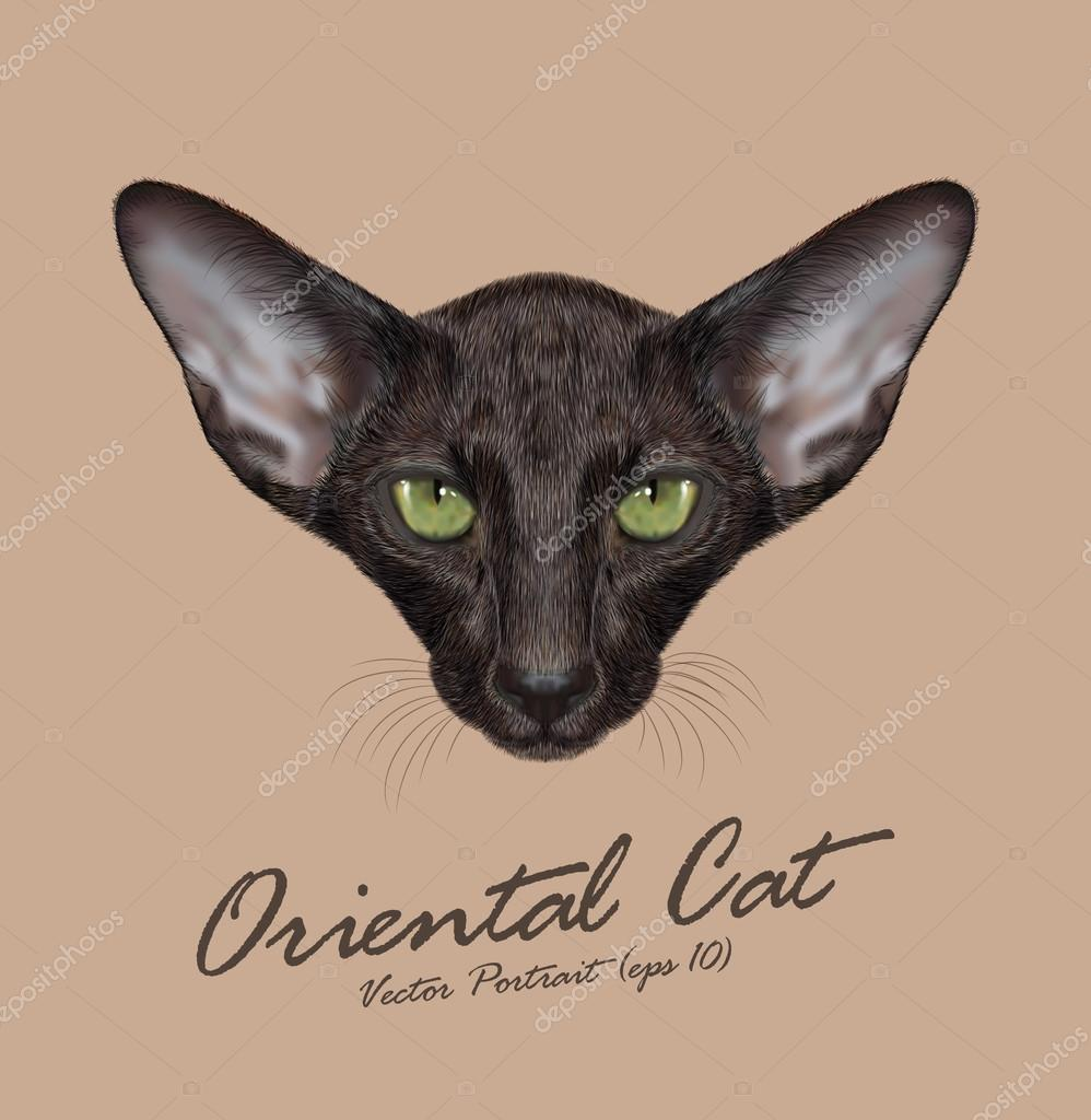 Oriental shorthair purebred cat animal cute face. Vector adorable oriental black kitten head portrait. Realistic fur portrait of oriental green eyes black kitty isolated on beige background.