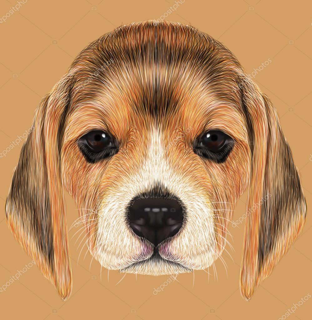 Illustrated Portrait of Beagle Dog