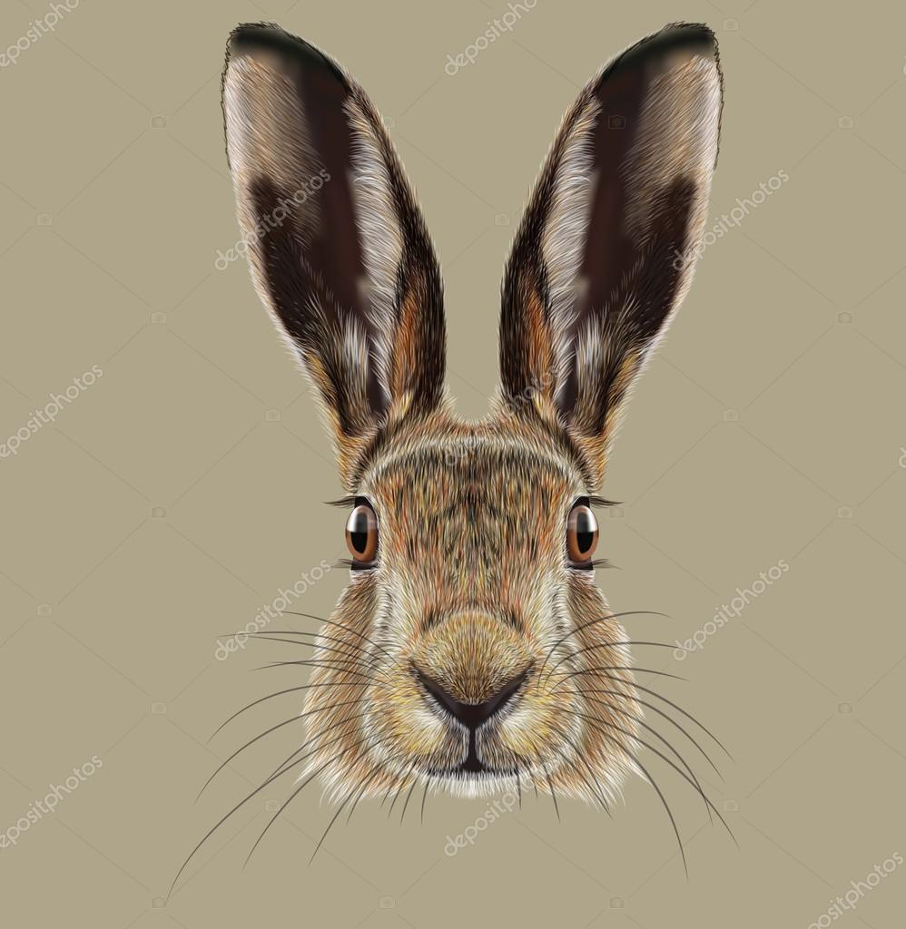Illustrated Portrait of Hare