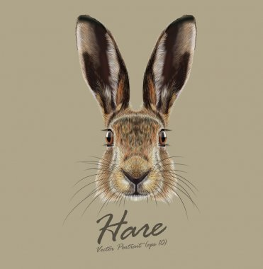 Hare or Rabbit wild animal cute face. Vector European hare, Lepus Europaeus funny bunny head portrait. Easter symbol. Realistic fur portrait of forest brown bunny animal isolated on beige background.