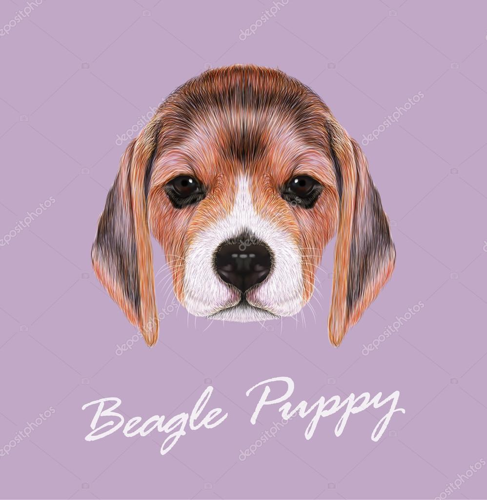 Vector Illustrated Portrait of Beagle Dog.