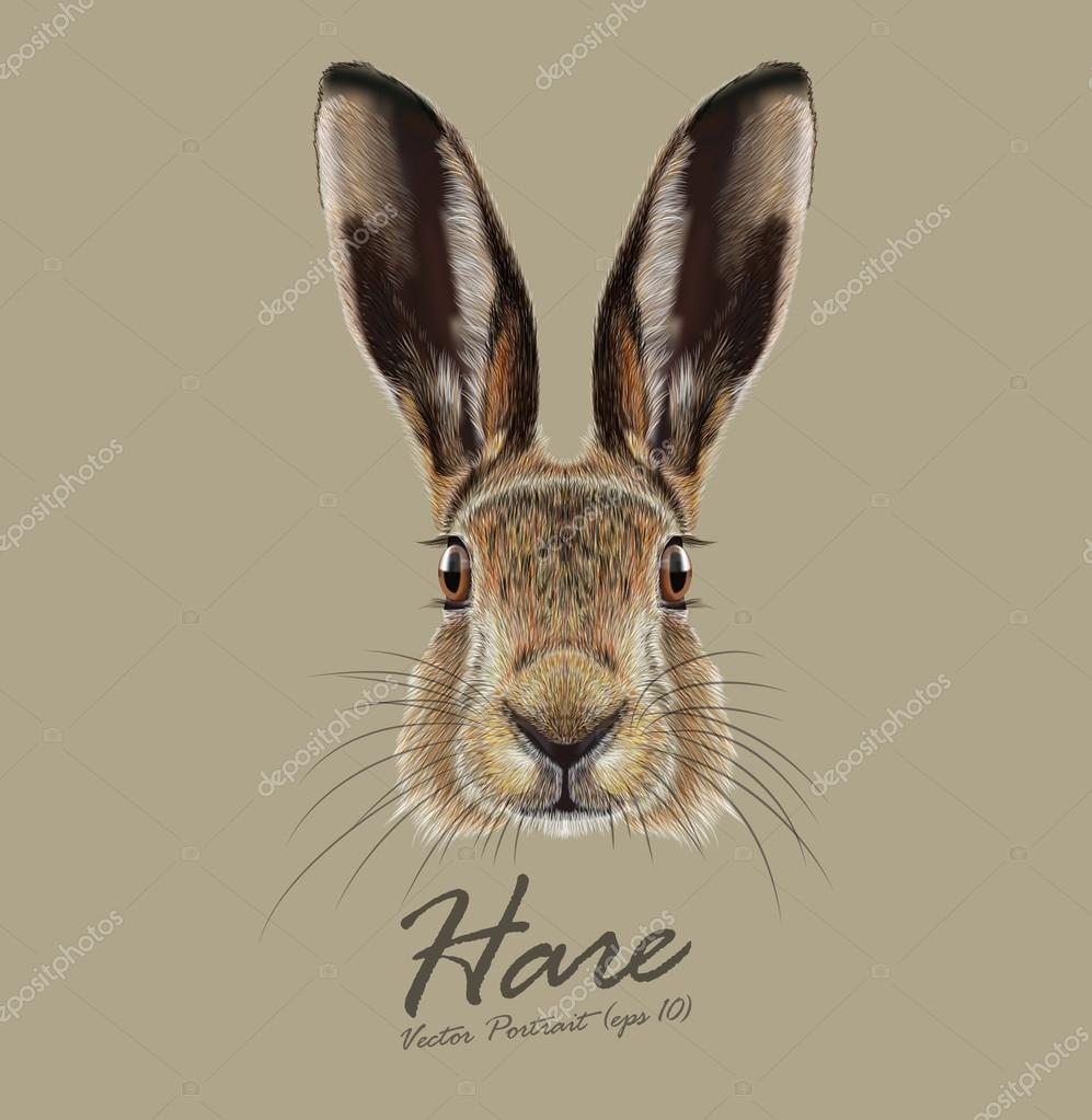 Vector Illustrated Portrait of Hare