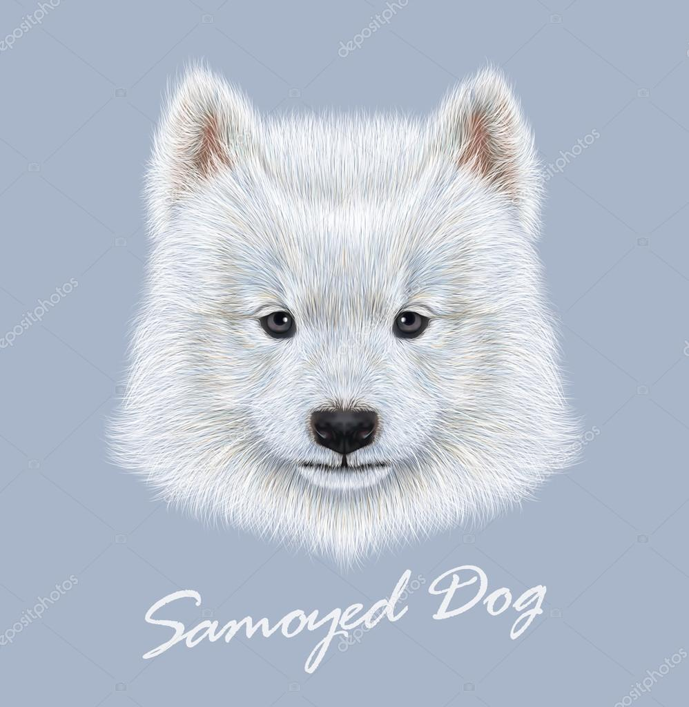 Samoyed dog animal cute face. Vector cute white eskimo spitz Samoyed puppy head portrait. Realistic fur portrait of purebred young happy siberian sammy doggy isolated on blue background.