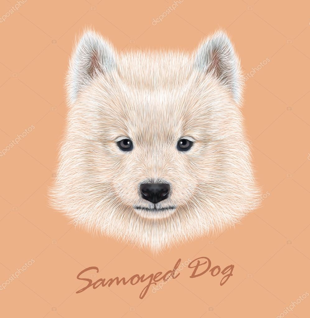 Samoyed dog animal cute face. Vector cute white eskimo spitz Samoyed puppy head portrait. Realistic fur portrait of purebred young happy siberian sammy doggy isolated on peach background.