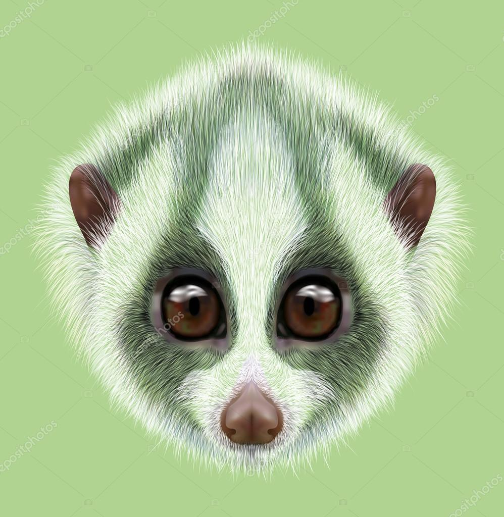 Illustrated Portrait of Slow loris.