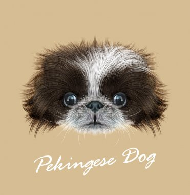 Pekingese dog animal cute face. Vector funny Chinese brown and white Pekingese puppy head portrait. Realistic fur portrait of purebred young peke doggy isolated on beige background.