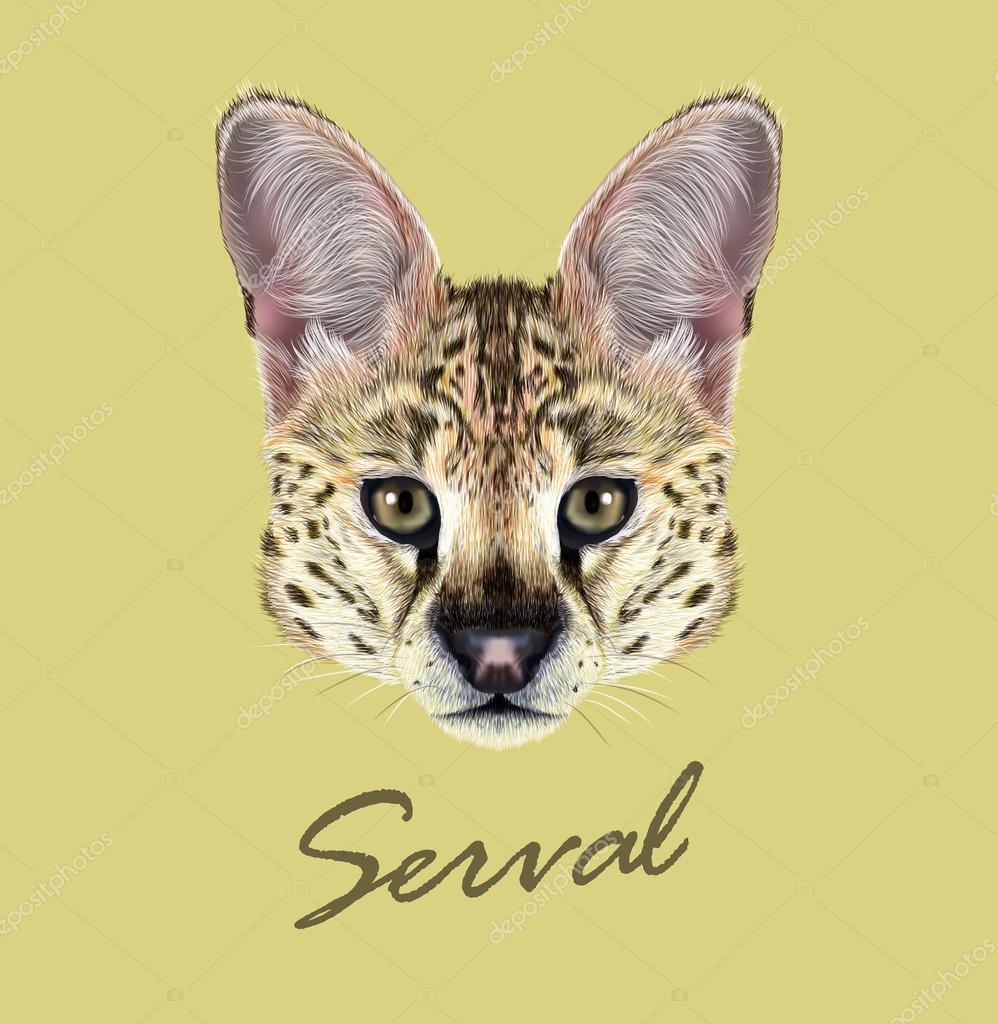 Vector Illustrated Portrait of Serval