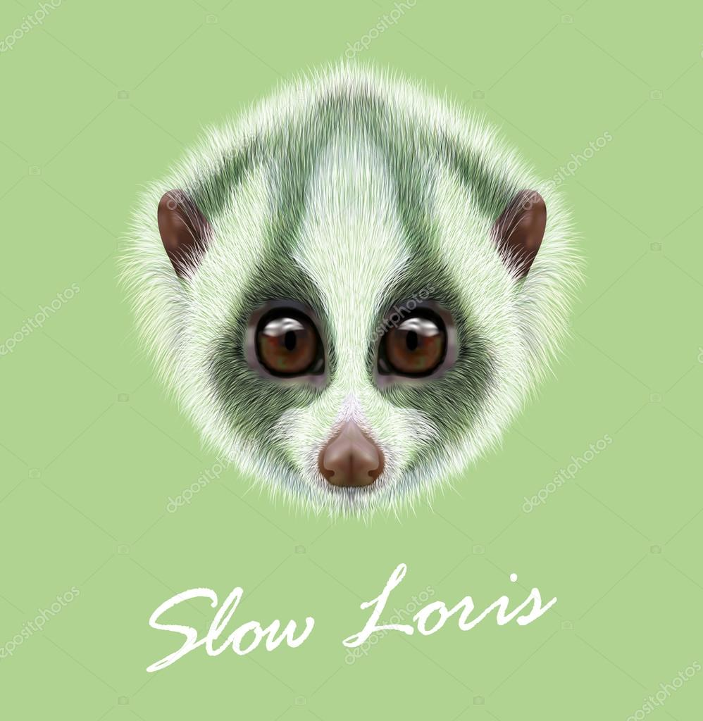 Slow Loris lemur animal cute face. Vector Asian jungle funny Slow Loris primate portrait. Realistic fur portrait of wild tropical Slow Loris monkey animal isolated on green background.
