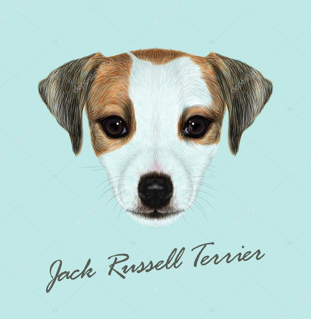 Jack Russell Terrier dog animal cute face. Vector funny Jack Russell Terrier brown and white puppy head portrait. Realistic fur portrait of purebred young doggy isolated on blue background.