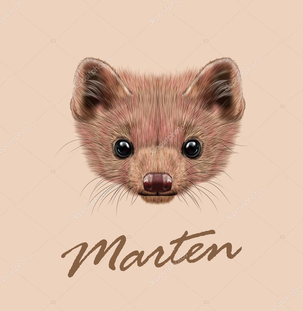 Marten animal cute face. Vector wild brown North American, European, Canadian pine marten head portrait. Martes martes, Martes foina. Realistic fur portrait of marten isolated on beige background.