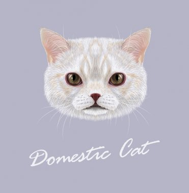 Cat animal cute face. Vector funny white vanilla tabby cat head portrait. Realistic fur portrait of domestic striped brown eyes kitty isolated on gray background.