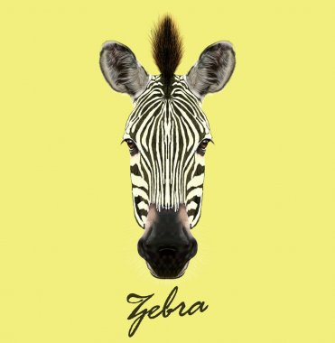 Zebra wild animal face. Vector cute African safari black and white Zebra head portrait. Realistic fur portrait of beautiful striped savannah Zebra on yellow background.