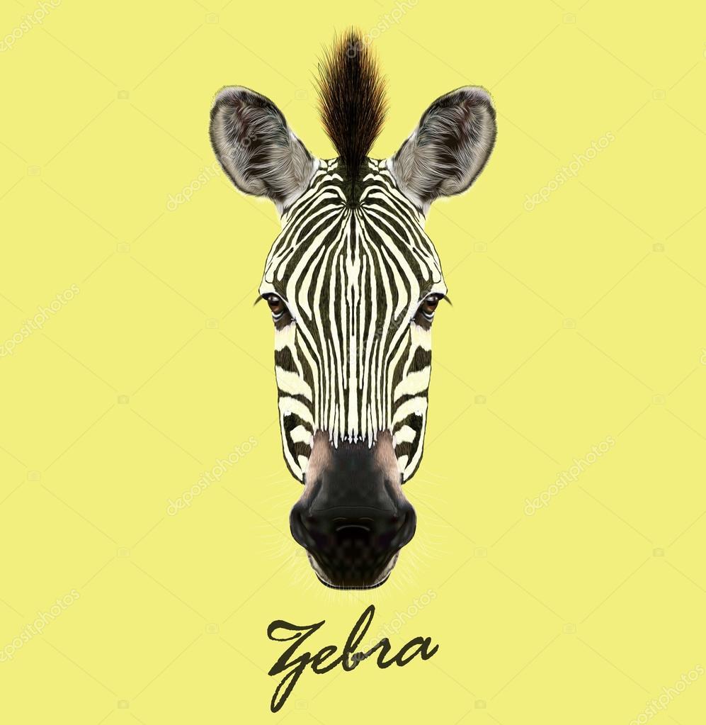 Vector Illustrated Portrait of Zebra.