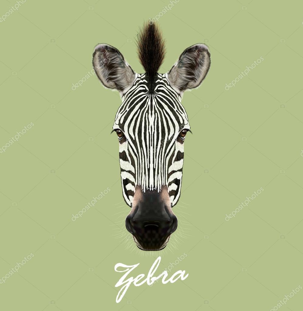 Zebra wild animal face. Vector cute African safari black and white Zebra head portrait. Realistic fur portrait of beautiful striped savannah Zebra on green background.