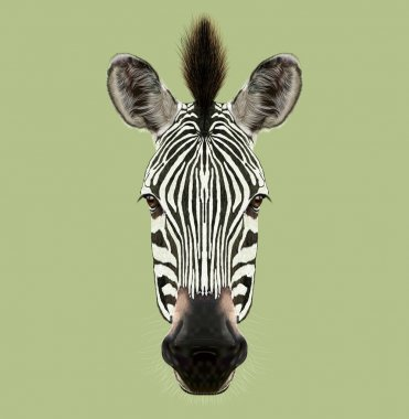 Illustrated Portrait of Zebra.