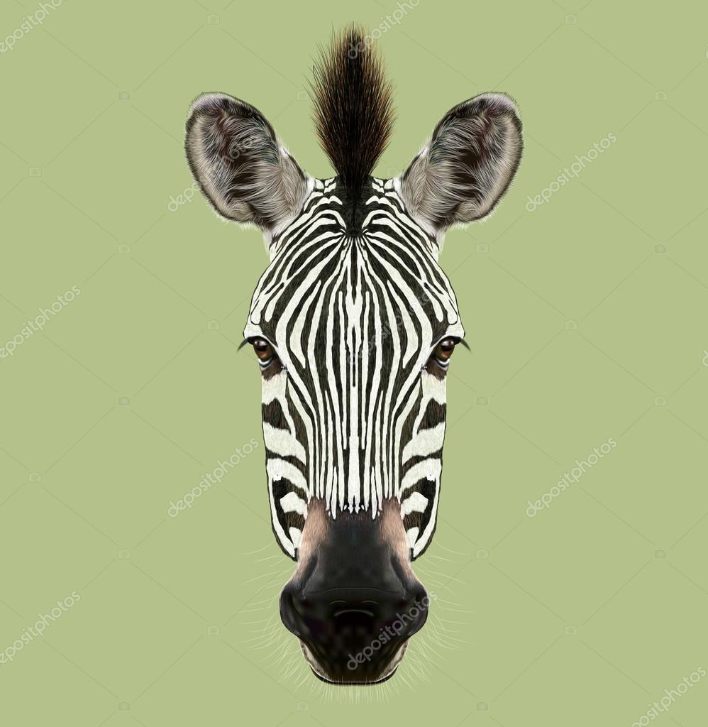 Illustrated Portrait of Zebra.
