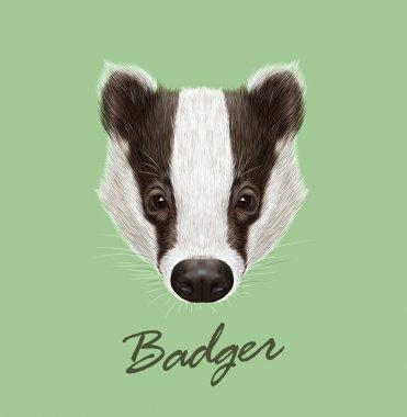 Badger wild animal face. Vector cute European, Eurasian black and white funny badger head portrait. Meles meles. Realistic fur portrait of forest badger on green background.