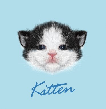 Kitten animal cute face. Vector funny newborn tiny cat head portrait. Realistic fur portrait of little black and white kitty isolated on blue background.