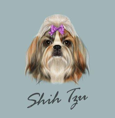 Shih Tzu Dog Portrait. Vector Illustration