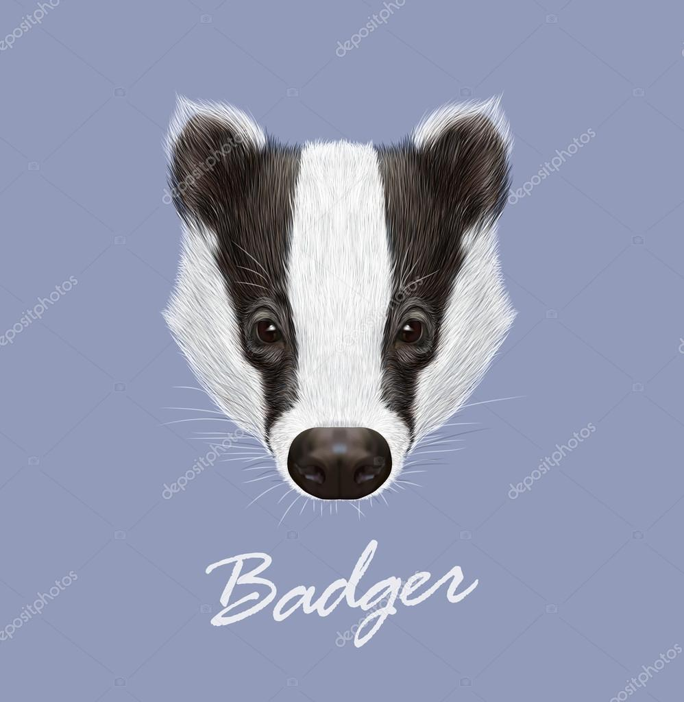 Badger Portrait. Vector Illustrated