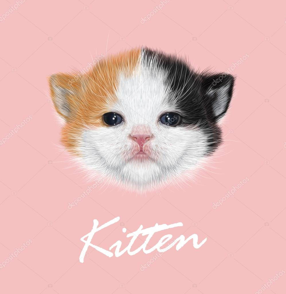 Domestic Kitten Portrait. Vector Illustration.