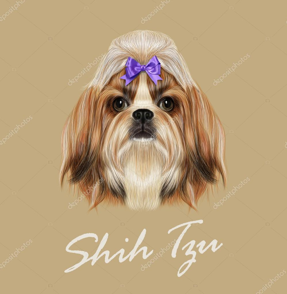Shih Tzu dog animal cute face. Vector funny Chinese purebred Shih tzu puppy head portrait. Realistic fur portrait of gold and white young Shih tzu doggy isolated on beige background.