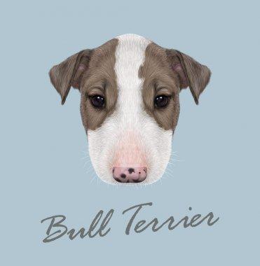 Bull Terrier Dog Portrait.