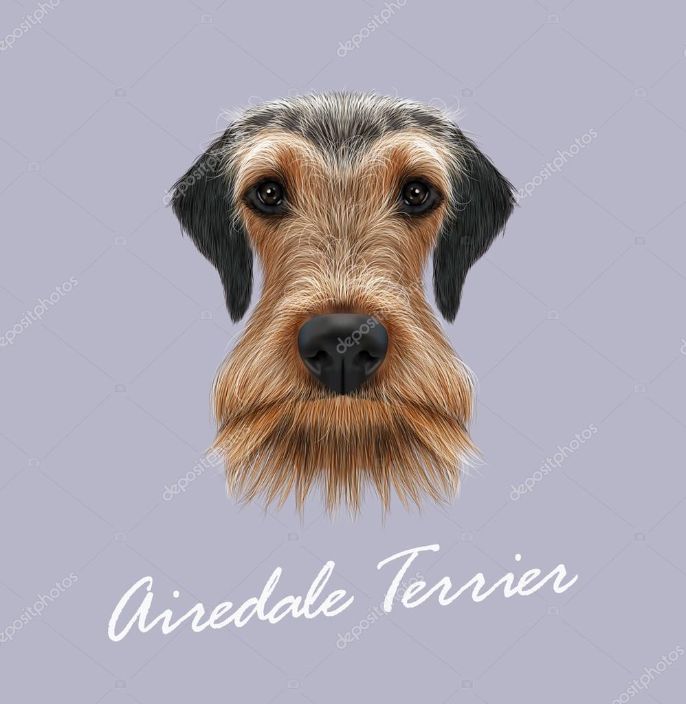 Airedale Terrier Dog Portrait.