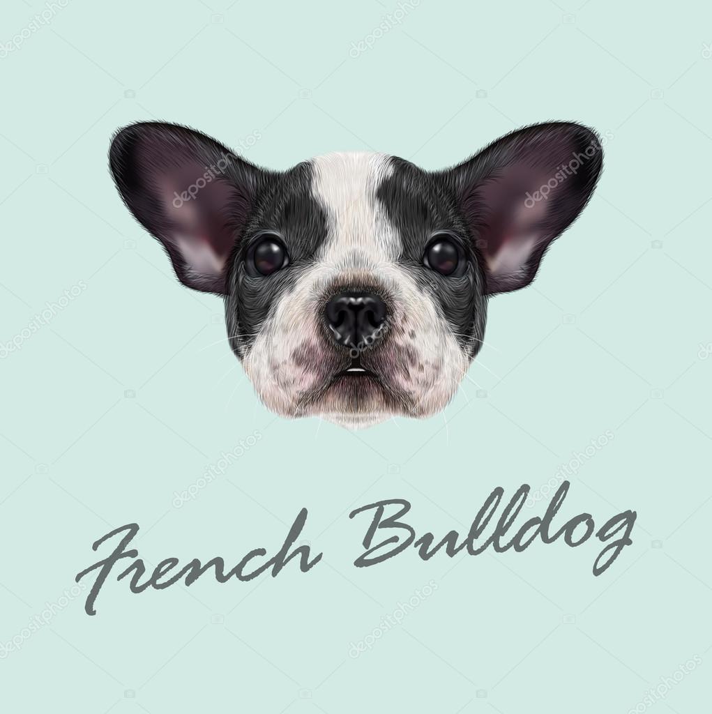 cachorro de bulldog francés — Vector de stock © ant_art #99982406