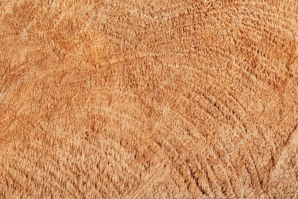 Poplar Wood Cross Section Grunge Texture